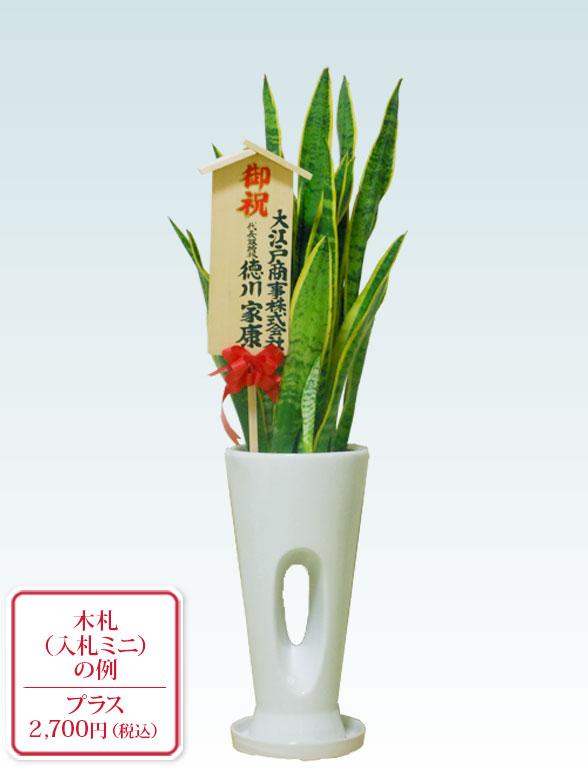 サンセベリア(陶器鉢植込み、穴あきタイプ白色) 10