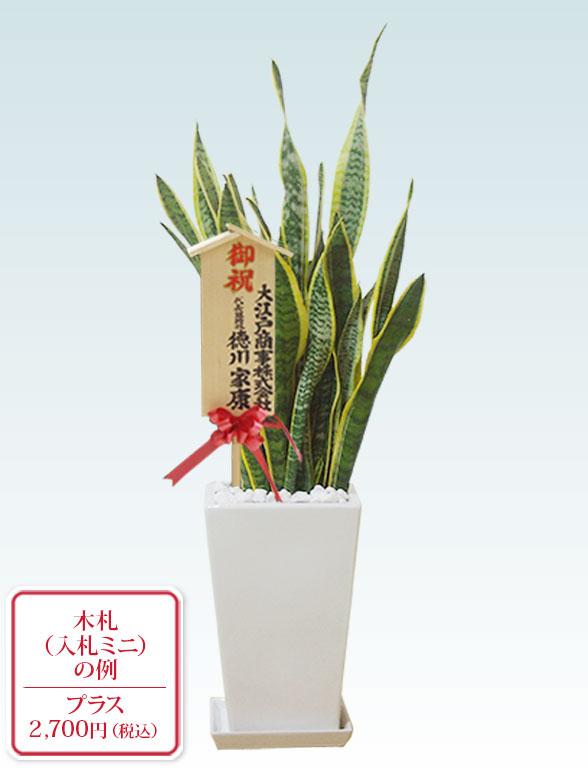 サンセベリア(陶器鉢植込み、スクエアタイプ白色) 10