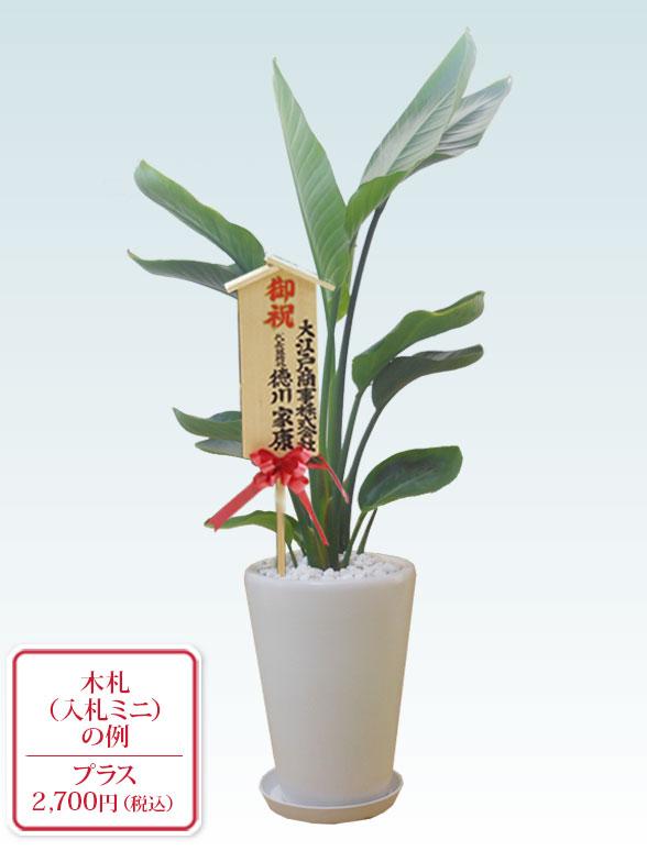 ストレリチア・オーガスタ(陶器鉢植込み、ラウンドタイプ白色) 10