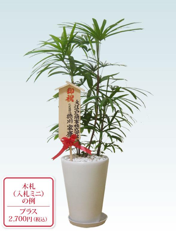 シュロチク(陶器鉢植込み、ラウンドタイプ白色) 10
