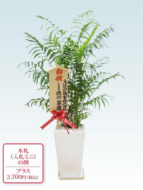 テーブルヤシ(陶器鉢植込み、スクエアタイプ白色)10