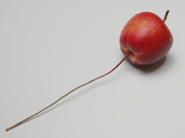 アメリカンアップルピック 3.5cm