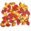 落ち葉枯れ葉セット_01