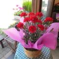 【送料無料】母の日の大定番♪上質のお花を厳選してお届け♪ カーネーション(赤色)5号鉢サイズ 鉢植え 【薫る花】【花 フラワー 鉢花 プレゼント ギフト 贈り物 母の日ギフト 母の日 特集 2021年】