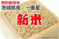 新米・特別栽培米・茨城県産一番星