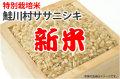 新米・鮭川村ササニシキ