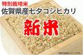 新米七夕コシヒカリ