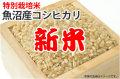 新米魚沼産コシヒカリ
