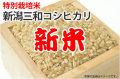 新米・特別栽培米新潟三和コシヒカリ