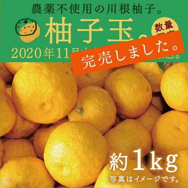 (完売)柚子玉約1kg