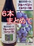 6本徳用 ブルーベリー・ビルベリー100 【送料無料!】