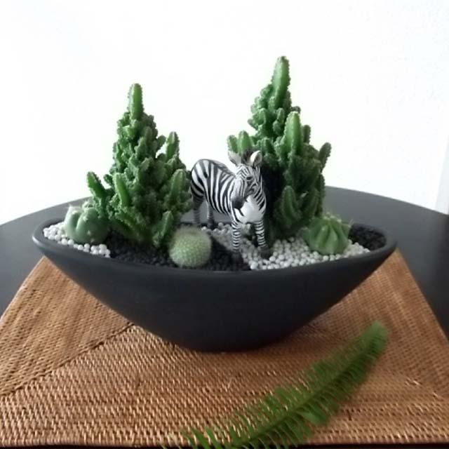 0263【送料無料・アニマルガーデン】観葉植物ギフト シマウマとセレウスサボテン浅型黒