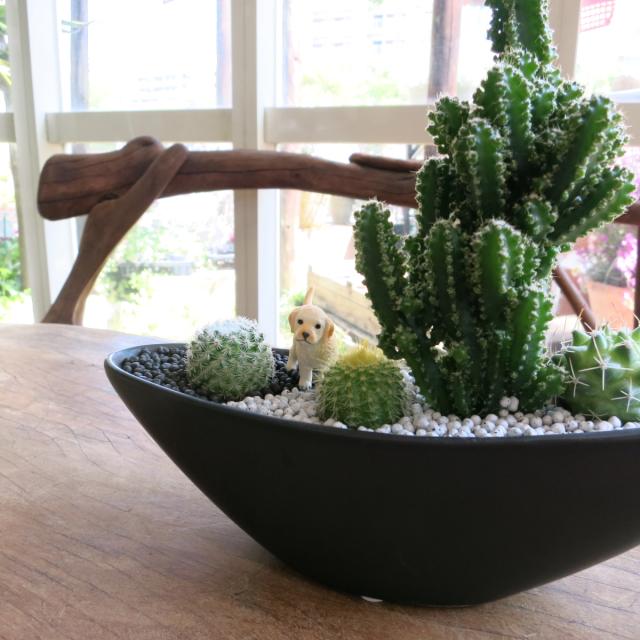 0223【送料無料・アニマルガーデン】観葉植物ギフト 子犬ちゃんとセレウスサボテン(黒)NEW