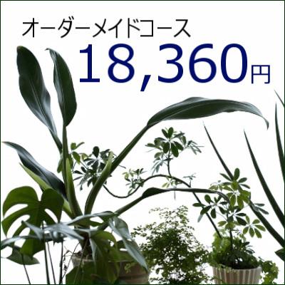 0347【オーダーメイド専用】観葉植物ギフト18,360円コース