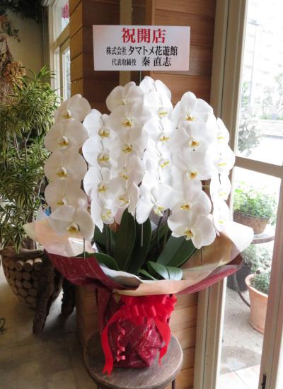 0349【送料無料】最高級コチョウラン大輪3本立ち(白花)お祝い用ラッピング