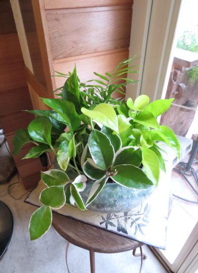0431観葉植物ギフト ミニ観葉4(グリーンサークル)
