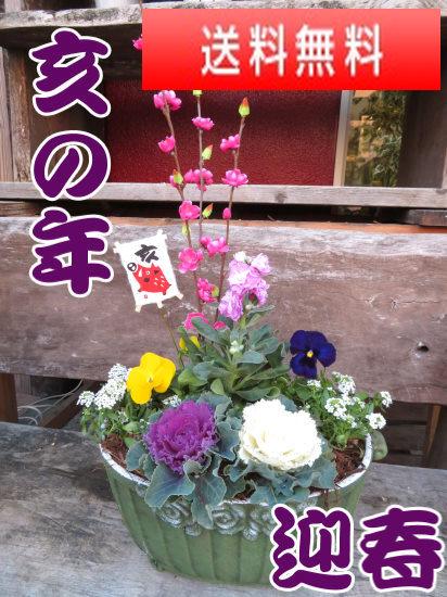 早割り★亥の年 冬の花いっぱいの屋外用迎春玄関かざりグリーン色の鉢【お歳暮迎春ギフト】