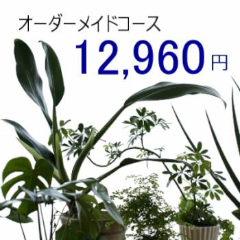 0457【オーダーメイド専用】観葉植物ギフト12,960円コース