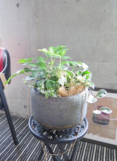 0496観葉植物ギフト ミニ観葉とブリキポットハンギング