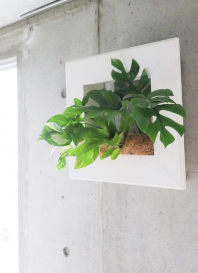 0533観葉植物ギフト 育てるプランツフレーム(ホワイト)