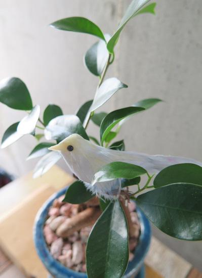 0529観葉植物ギフト ハッピーな青い鳥と幸せのガジュマル