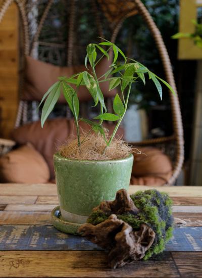 0535観葉植物ギフト 鉢と植物が選べる!私だけのミニグリーン【鉢色:ライトグリーン】