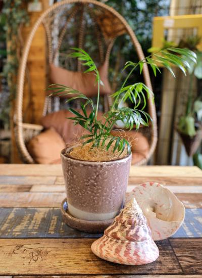 0538観葉植物ギフト 鉢と植物が選べる!私だけのミニグリーン【鉢色:ライトパープル】