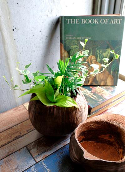 0542観葉植物ギフト エコグリーンwithヤシの実ポット
