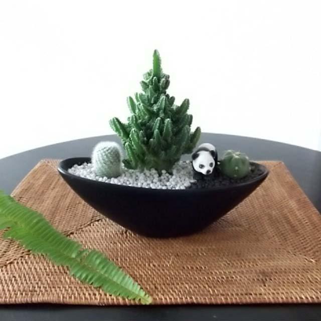 0260【送料無料・アニマルガーデン】観葉植物ギフト パンダとセレウスサボテン