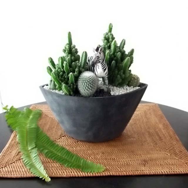 0264【送料無料・アニマルガーデン】観葉植物ギフト シマウマとセレウスサボテン(黒鉢深型)