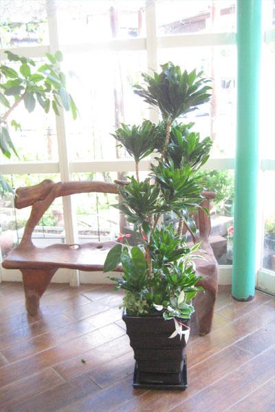 0038観葉植物ギフト コンパクターのかっこいい黒鉢アレンジ