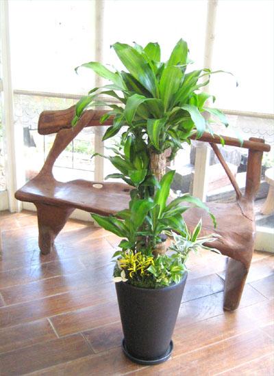 0120観葉植物ギフト 幸福の木 華やかな寄せ植え黒鉢