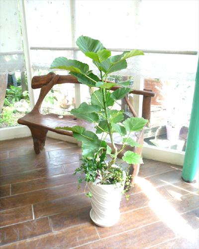 0035インテリア観葉植物ギフト ~お日様大好きウンベラータ~ミニ観葉アレンジ