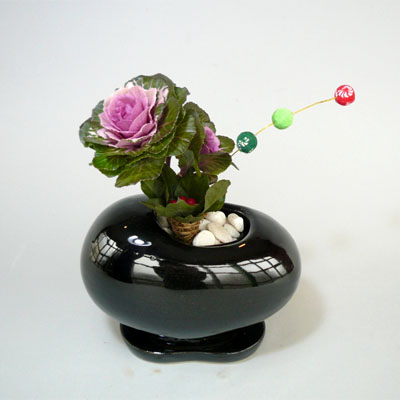 早割り黒ビーンズ鉢とミニ葉ボタンのかわいい迎春アレンジ【お歳暮迎春ギフト送料無料】