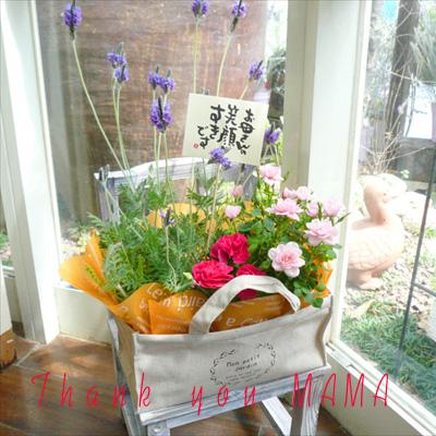 やわらか布バッグの鉢花アレンジ【送料無料母の日ギフト】