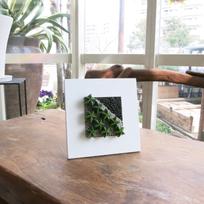 0222観葉植物ギフト サボテンのおしゃれフレーム(正方形)