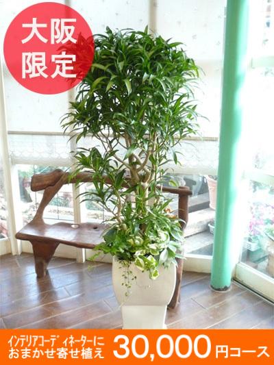 0142大阪市内限定【大型サイズおまかせ】オーダーメイドの観葉植物プラン