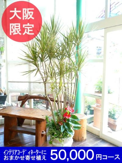 0141大阪市内限定【大型サイズおまかせ】オーダーメイドの観葉植物プラン50000円コース