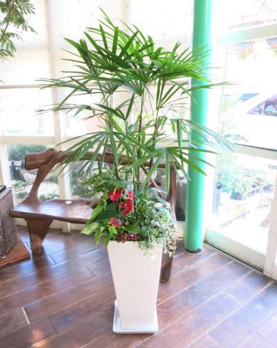 0048観葉植物ギフト シュロチクと華やかミニ観葉