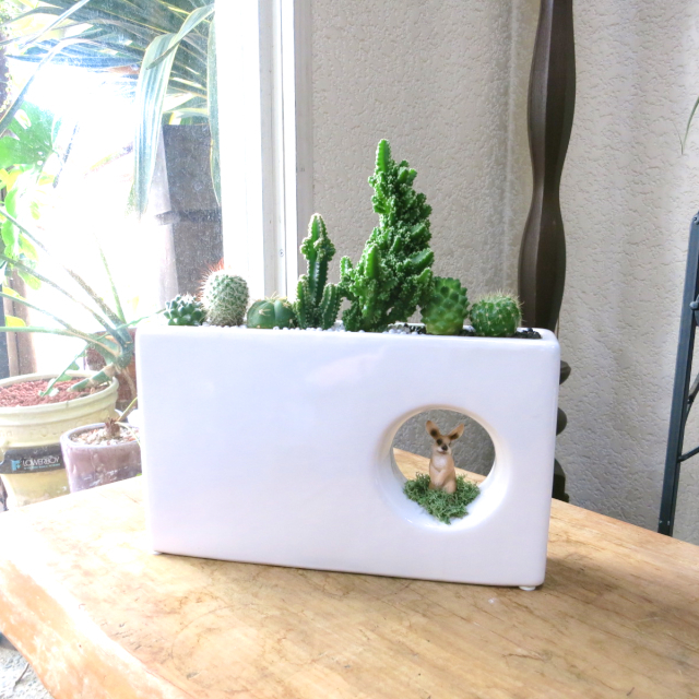0129観葉植物ギフトアニマルガーデン うさぎちゃんがこんにちは
