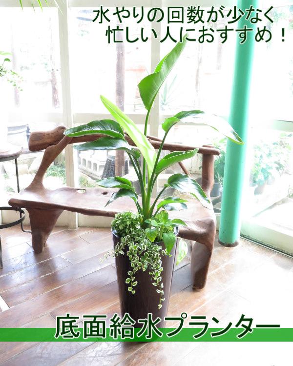 0180水やり楽々!底面給水でローメンテナンス観葉植物ギフト(VOGUEプランター黒)