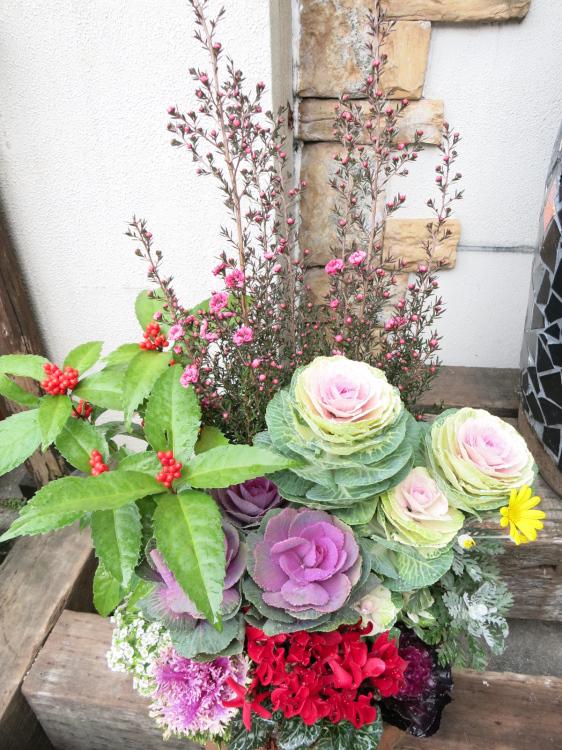 早割り超豪華!おどり葉ボタンと冬の花いっぱいの屋外用迎春玄関かざり【お歳暮迎春ギフト】