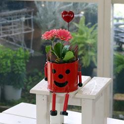 スマイルブリキMAN(ピンクガーベラ鉢花)【送料無料花の母の日ギフト】md040