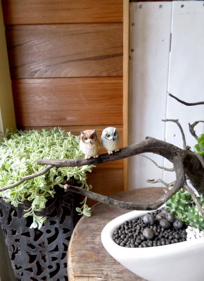 0320【アニマルガーデン】観葉植物ギフト 幸せのペアふくろう白浅鉢