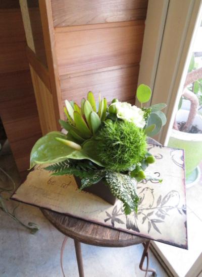 0346夏の御祝いにおすすめグリーンたっぷりの生花アレンジメントチョコポット【観葉倶楽部グリーンブーケ】