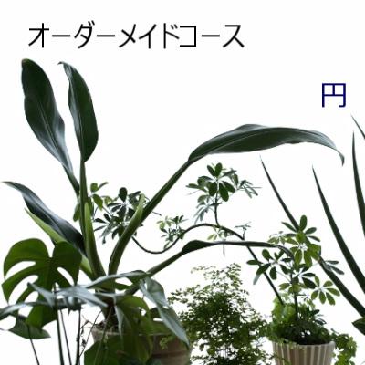 0547【オーダーメイド専用】観葉植物ギフトおまかせコース