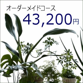0356【オーダーメイド専用】観葉植物ギフト43,200円コース