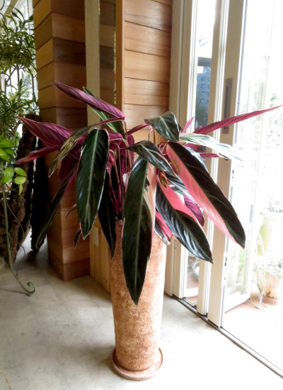 0363観葉植物ギフト トリカラーとナバホ鉢【クリスマスSALE】