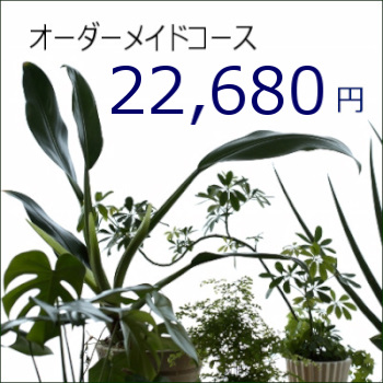 0365【オーダーメイド専用】観葉植物ギフト22,680円コース