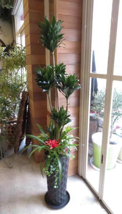 0368観葉植物ギフト コンパクターとダイヤブラック鉢